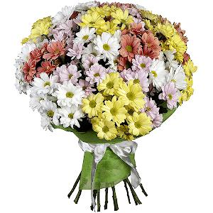 Хризантема кустовая (21 шт.)